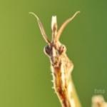 Foto del profilo di fcampidoglio