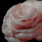 Foto del profilo di mg.dg