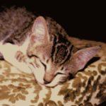 Foto del profilo di napogatto