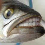 Foto del profilo di gianpz_