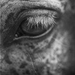 Foto del profilo di Maurizio_Como