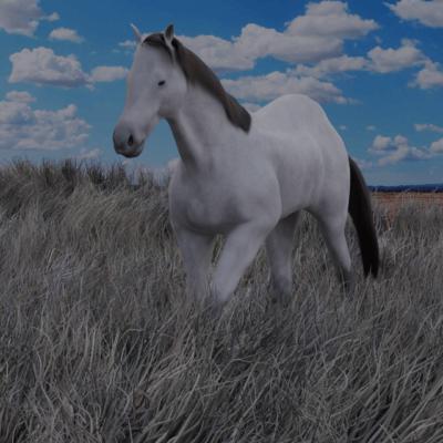 cavallo-8