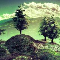 paesaggio-bosco
