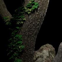 albero_r_1000_f