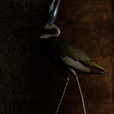 egyptian-ibis