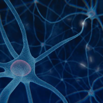 rete-neurale
