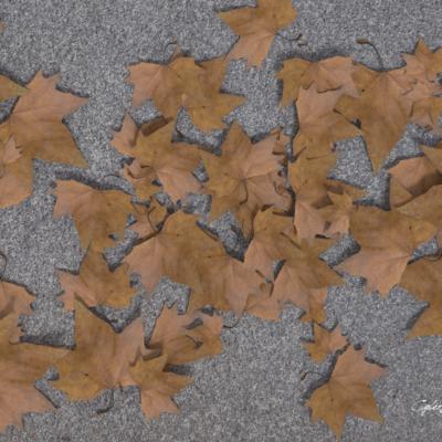foglie_01