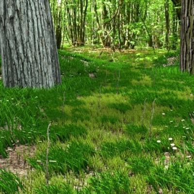foresta2