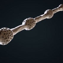 the-elder-wand_view_01