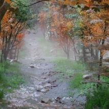 forest_scene