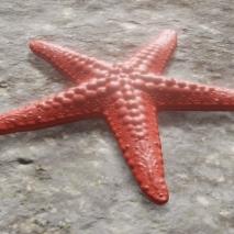 render-stella-marina-1jpg