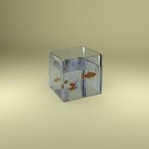 vasca-pesci