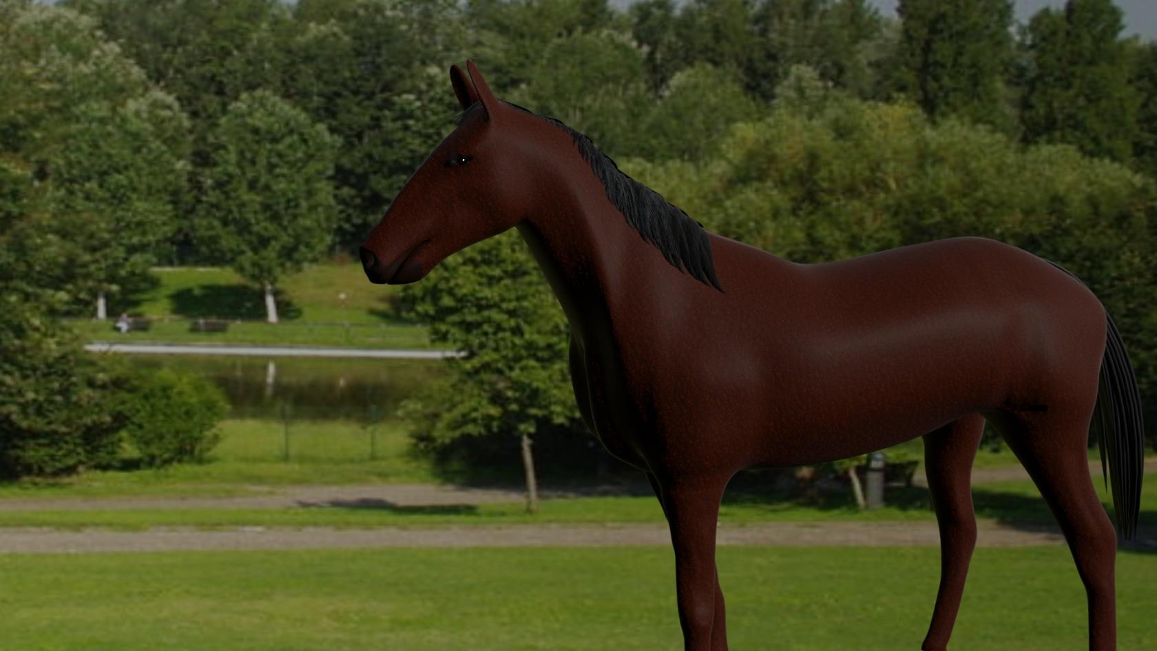 cavallo01