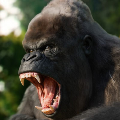 angry-gorilla