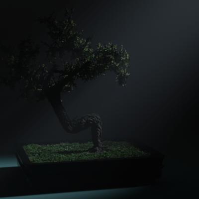 bonsai-4