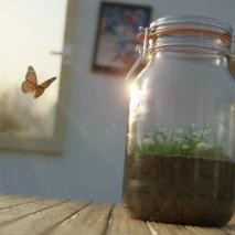 the-jar