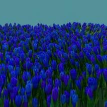 prato_tulipano1