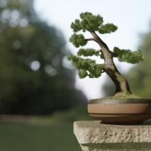 bonsai_final